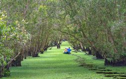 O ferryman toma o viajante em uma excursão do barco ao longo dos canais na floresta dos manguezais foto de stock royalty free