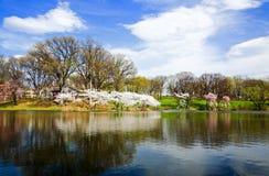 O festival da flor de cereja em New-jersey Imagem de Stock
