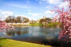 O festival da flor de cereja em New-jersey foto de stock