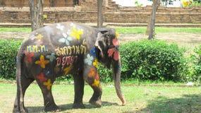 O festival de Songkran é comemorado com os elefantes em Ayutthaya Imagens de Stock
