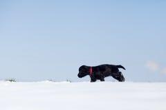 O filhote de cachorro bonito anda só na neve Imagem de Stock Royalty Free