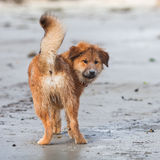 O filhote de cachorro bonito de Elo olha para trás fotos de stock royalty free
