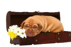 O filhote de cachorro com flores está em um tronco. Imagens de Stock