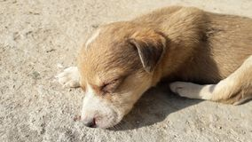 O filhote de cachorro do sono imagens de stock