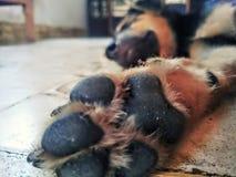 O filhote de cachorro do sono fotos de stock royalty free