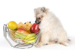 O filhote de cachorro e a fruta Foto de Stock Royalty Free