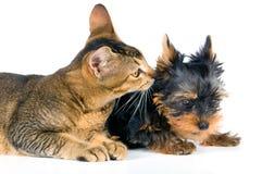 O filhote de cachorro e o gatinho Fotos de Stock Royalty Free