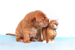 O filhote de cachorro gosta de seu gato do brinquedo imagem de stock royalty free