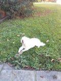 O filhote de cachorro pequeno aprecia o dia Imagem de Stock