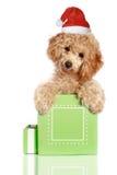 O filhote de cachorro pequeno da caniche do alperce está em uma caixa de presente imagem de stock royalty free