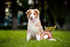 O filhote de cachorro pequeno e seu concedem o copo Imagens de Stock