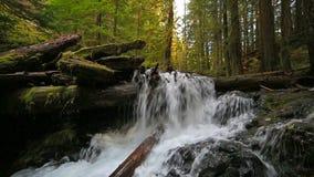 O filme alto da definição da angra impressionante da pantera cai com mergulho de sons audio da água no hd de Washington State 108 video estoque