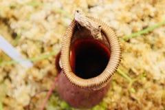 O fim acima da carne voa a mosca que come o jardim botânico da planta imagem de stock royalty free