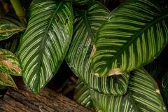 O fim acima da cor verde sae no jardim bonito imagens de stock