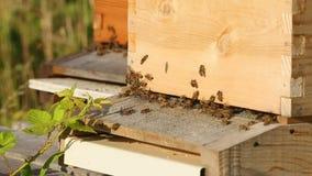 O fim acima das abelhas entra e retira em colmeia filme