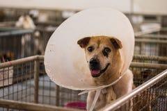 O fim acima de um cão disperso deficiente está sorrindo em uma gaiola, desabrigada fotografia de stock royalty free