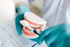 O fim acima dos dentistas da mão está demonstrando como escovar corretamente seus dentes foto de stock royalty free