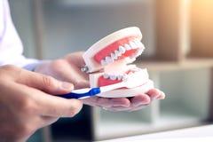 O fim acima dos dentistas da mão está demonstrando como escovar seu Teet imagem de stock royalty free