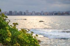 O fim detalhado acima do tiro de uma planta marinha mediterrânea encontrou sobre foto de stock royalty free