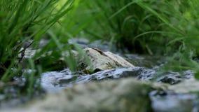 O fim do baixo ângulo acima da grama e as rochas na água fluem filme