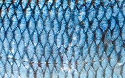 O fim do fundo das escalas de peixes acima Cor de prata Imagem de Stock Royalty Free