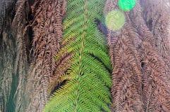 O fim secou acima as folhas da palmeira, fundo abstrato da natureza Foto de Stock