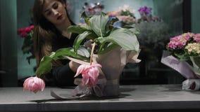 O florista da mulher embalou acima do Medinilla cor-de-rosa da flor no potenciômetro no papel cor-de-rosa e toma dele video estoque