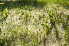 O fluff branco encontra-se na grama verde foto de stock