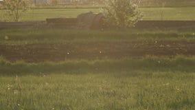 O fluff do álamo branco voa em um campo no por do sol video estoque