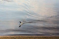 O flutuador da pesca Imagem de Stock Royalty Free