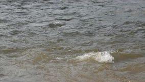 O fluxo da água faz a onda e rippled no rio vídeos de arquivo