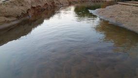 O fluxo do enchimento da água considera os peixes fotografia de stock royalty free
