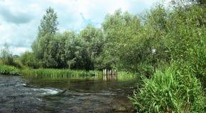 O fluxo do rio entre os juncos e os arbustos Imagem de Stock