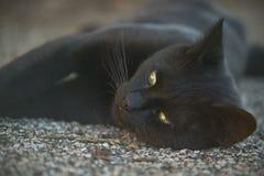 O focinho do oThe do focinho de um gato preto Foto de Stock