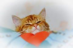 O focinho ruivo pequeno do gatinho olha-o em antecipação a h Imagens de Stock