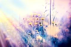 O foco macio no prado amarelo floresce, unfocused Imagem de Stock Royalty Free