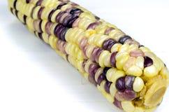 O foco selecionado de um únicos amarelo e roxo ferveu o milho Imagem de Stock