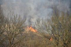 O fogo é grama seca ardente na floresta, fumo de aumentação fotos de stock royalty free
