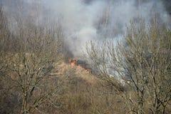 O fogo é grama seca ardente na floresta, fumo de aumentação fotografia de stock royalty free