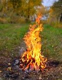 O fogo Imagens de Stock Royalty Free