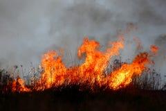 O fogo das grandes áreas da grama seca no prado pode transformar em uma tragédia terrível como se se aproximou casas residenciais imagem de stock royalty free
