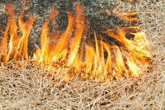 O fogo na natureza - queimaduras uma grama no campo Fotografia de Stock