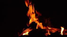O fogo queima-se na noite em um acampamento do turista video estoque