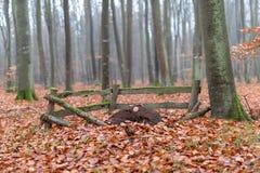 O formigueiro cercado com os Pegs de madeira velhos Cenário enevoado em um myst imagem de stock royalty free
