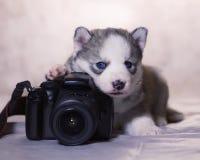 O fotógrafo do principiante sabe tomar fotos foto de stock royalty free