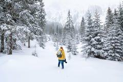 O fotógrafo está andando na floresta do inverno foto de stock royalty free