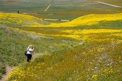 O fotógrafo fêmea da mulher toma fotos dos wildflowers bonitos no monumento nacional liso de Carrizo durante o superbloom dentro fotos de stock