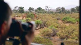 O fotógrafo no safari em África toma imagens de um girafa selvagem fora do carro vídeos de arquivo