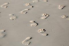O fragmento da areia tropical da praia com vário muito pé humano segue o fundo Imagens de Stock