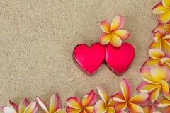 O Frangipani, plumeria floresce com dois corações vermelhos Imagem de Stock Royalty Free